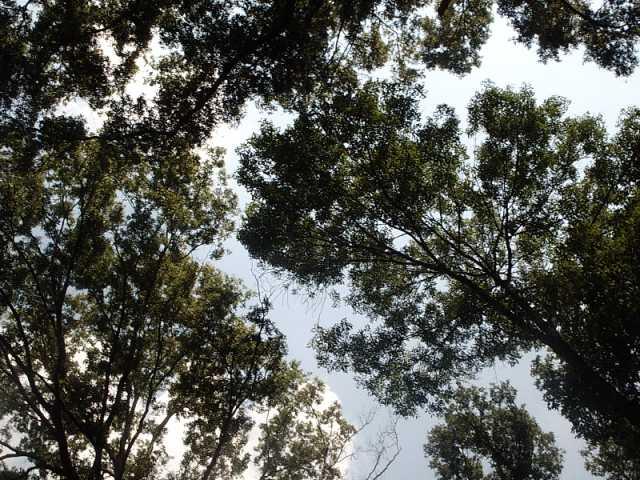 Trees!!!!